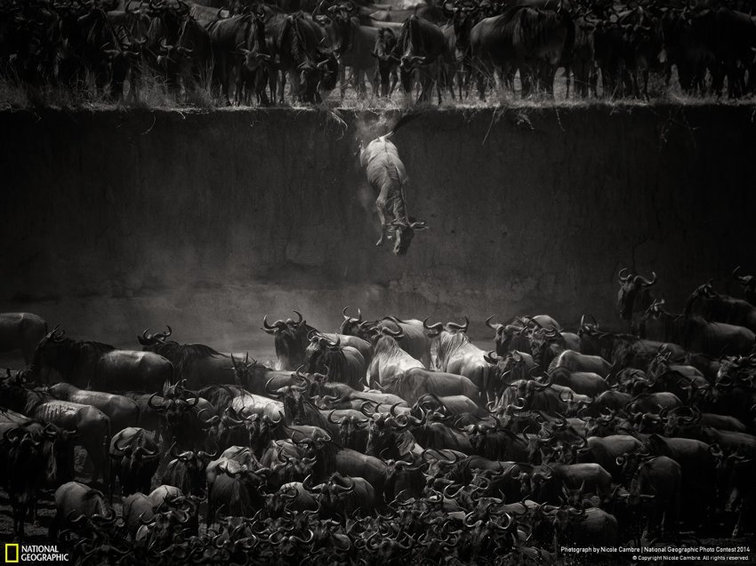 National Geographic photo2014_3