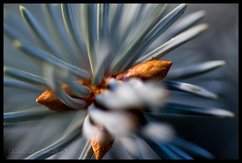 Zeiss Milvus 50 - foto3