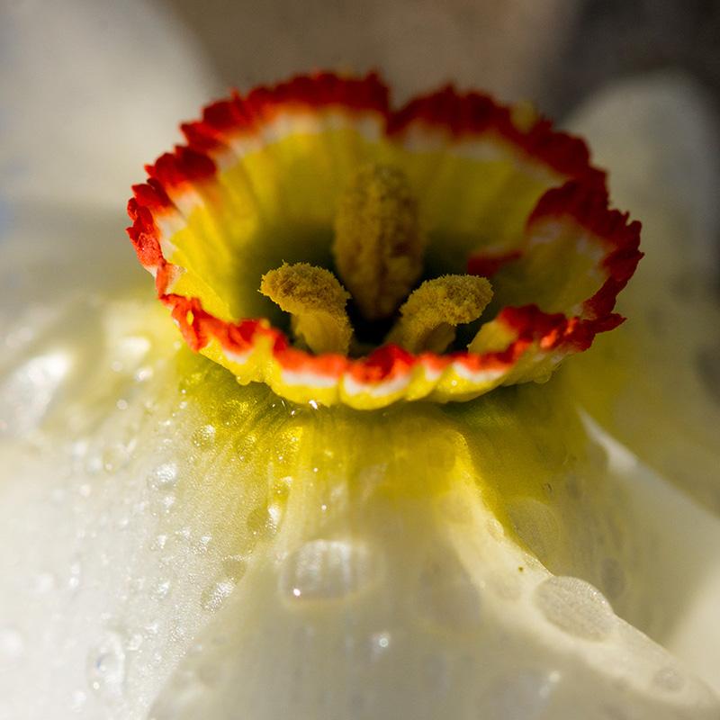 kwiaty flower6