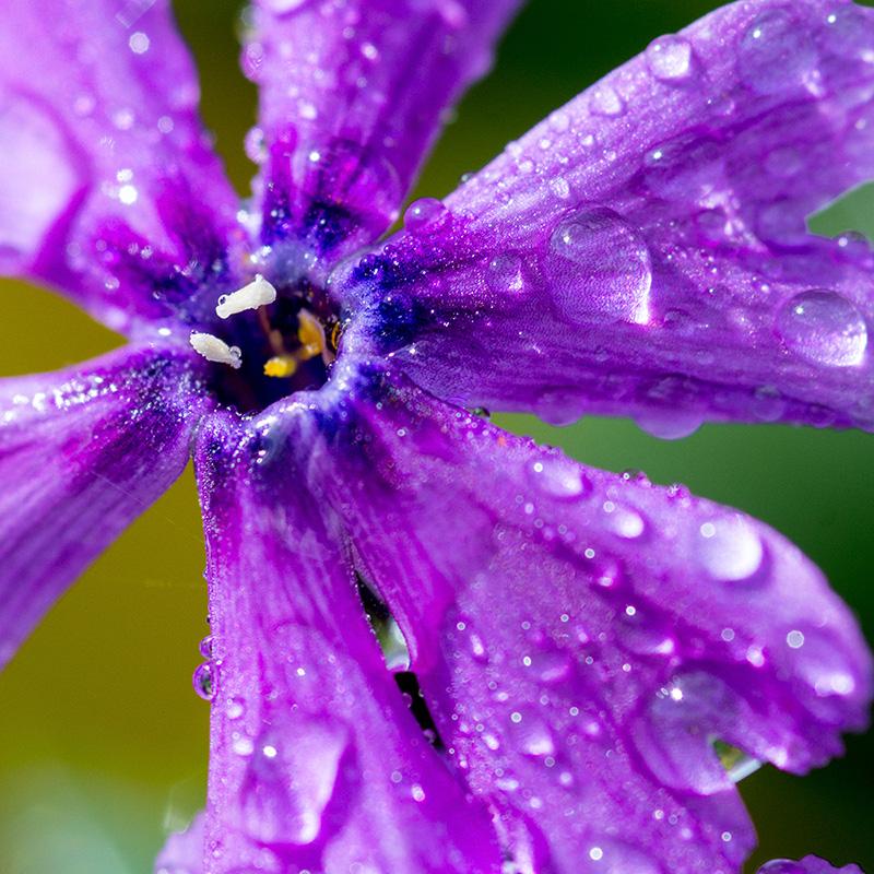 kwiaty flower3